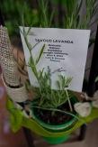 tavoli fiori sale & tableaux_5